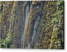 An Incline Of Bromeliads Acrylic Print