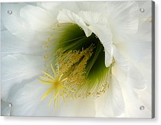 Acrylic Print featuring the photograph An Inside View by Cindy McDaniel