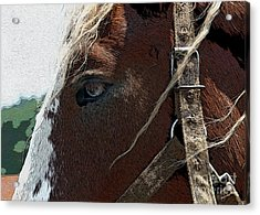 An Old Friend Acrylic Print by Yvonne Wright