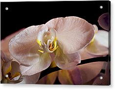 The Lisa Orchid Acrylic Print