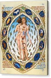 Anatomical Man Acrylic Print by Granger