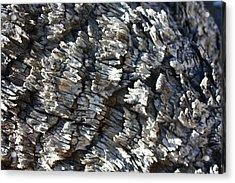 Ancient Bark Acrylic Print