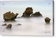 Ancient Coral Acrylic Print by Adam Romanowicz