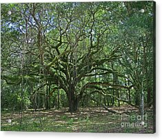 Ancient Oak Cathedral Of Moss And Fern Acrylic Print