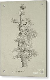 Ancient Oak Tree With A Storks Nest Acrylic Print by Caspar David Friedrich