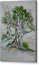 Ancient Olive Grove Acrylic Print by Therese Alcorn
