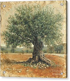 Ancient Olive Tree Acrylic Print