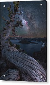 Ancient Roots Of Crater Lake Acrylic Print