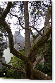 Ancient Tree At Chateau De Chenonceau Acrylic Print by Susan Alvaro