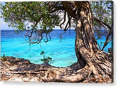 Ancient Tree Acrylic Print