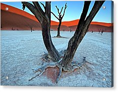 Ancient Trees In The Vlei Acrylic Print