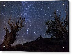Ancients Acrylic Print by Cat Connor