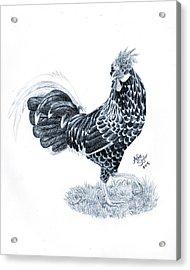 Ancona Chicken Acrylic Print by Ashe Skyler