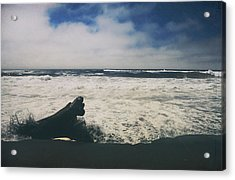 And It Goes On Acrylic Print by Laurie Search