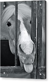 Acrylic Print featuring the photograph And That's What I Think Of That by Barbara Dudley