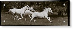 Acrylic Print featuring the photograph And The Race Is On D5932 by Wes and Dotty Weber