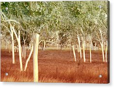 Acrylic Print featuring the photograph And The Trees Danced by Holly Kempe