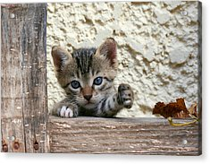 And Two Milk Please Acrylic Print by Roeselien Raimond