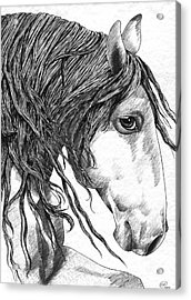Andalusian Horse Acrylic Print by Kate Black