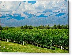Andes Vineyard Acrylic Print