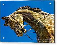 Andrew Jackson's Horse  Acrylic Print by Christopher Holmes
