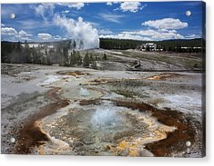 Anemone And Old Faithful In Concert Acrylic Print