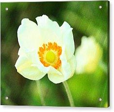Anemone Acrylic Print by Cathie Tyler