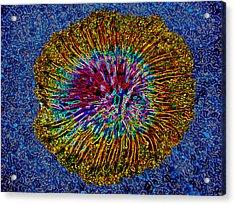 Anemone On Blue Acrylic Print by Bruce Iorio