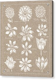 Anemone Plate II Acrylic Print by Wild Apple Portfolio