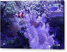 Anemone Starlight Acrylic Print