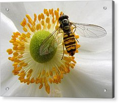 Anemone With Visitor Acrylic Print