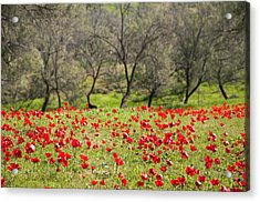 At Ruchama Forest Israel Acrylic Print