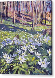 Anemones In The Meadow Acrylic Print by David Lloyd Glover