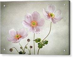 Anemones Acrylic Print