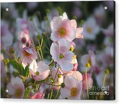 Anemones Soft Beauty Acrylic Print by France Laliberte