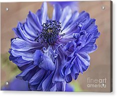 Anemone Blues I Acrylic Print by Terry Rowe
