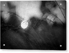 Anesthesia Acrylic Print by Taylan Apukovska