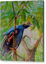 Acrylic Print featuring the painting Angel Bird Of  North Moluccas by Jason Sentuf