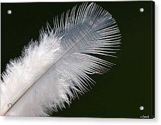 Angel Feather Acrylic Print by Carol Lynch