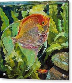 Angel Fish Acrylic Print by Donna Munsch