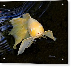 Acrylic Print featuring the photograph Angel Koi by Mariarosa Rockefeller