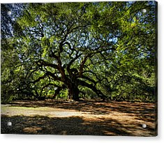 Angel Oak 001 Acrylic Print by Lance Vaughn