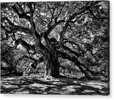 Angel Oak 002 Acrylic Print