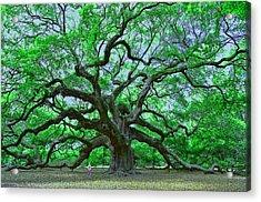 Angel Oak Acrylic Print by Allen Beatty