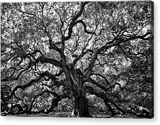 Angel Oak Acrylic Print by Renee Sullivan