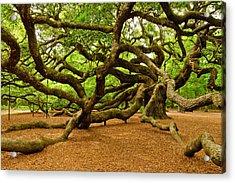 Angel Oak Tree Branches Acrylic Print by Louis Dallara