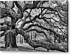 Angel Oak Tree Ir Hdr Acrylic Print