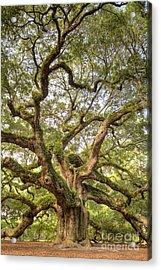 Angel Oak Tree Johns Island Sc Acrylic Print by Dustin K Ryan