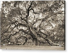 Angel Oak Tree Of Life Sepia Acrylic Print