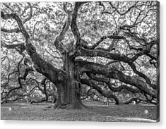 Angel Oak Tree Acrylic Print by Patricia Schaefer